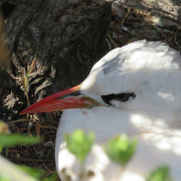 uccelli madagascar