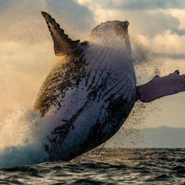balena madagascar