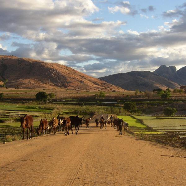 cultura madagascar