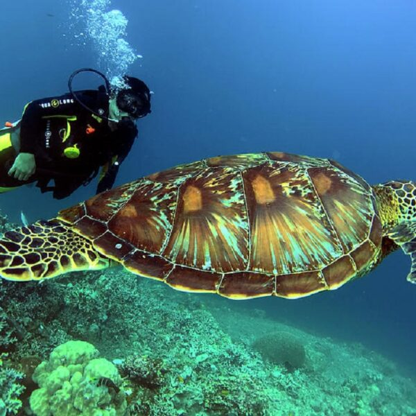 tartaruga e diver