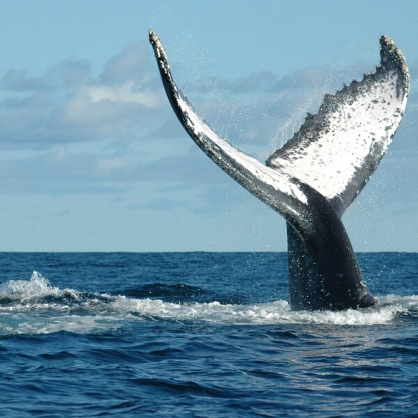 whale watching madagascar