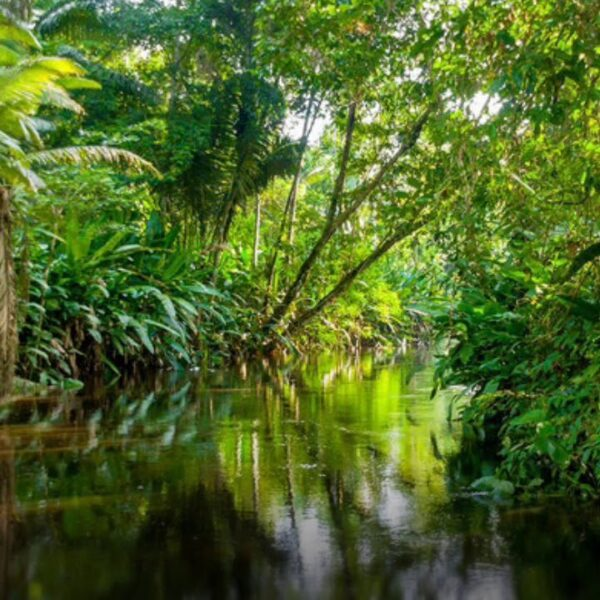 Foresta Pluviale in Madagascar
