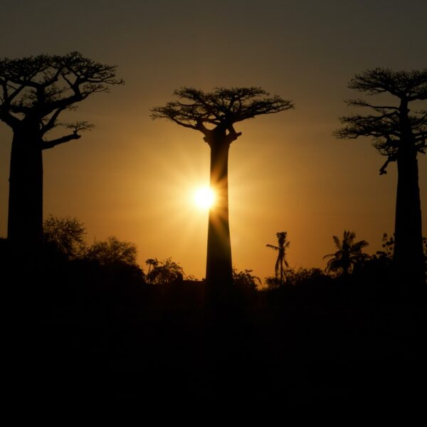 avenue du baobab al tramonto