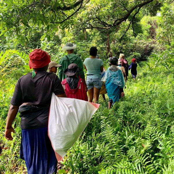 foresta masoala madagascar