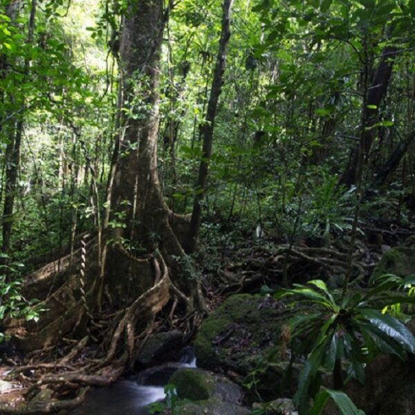 masoala foresta madagascar
