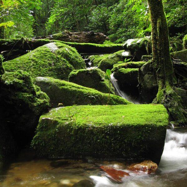 parco nazionale masoala madagascar